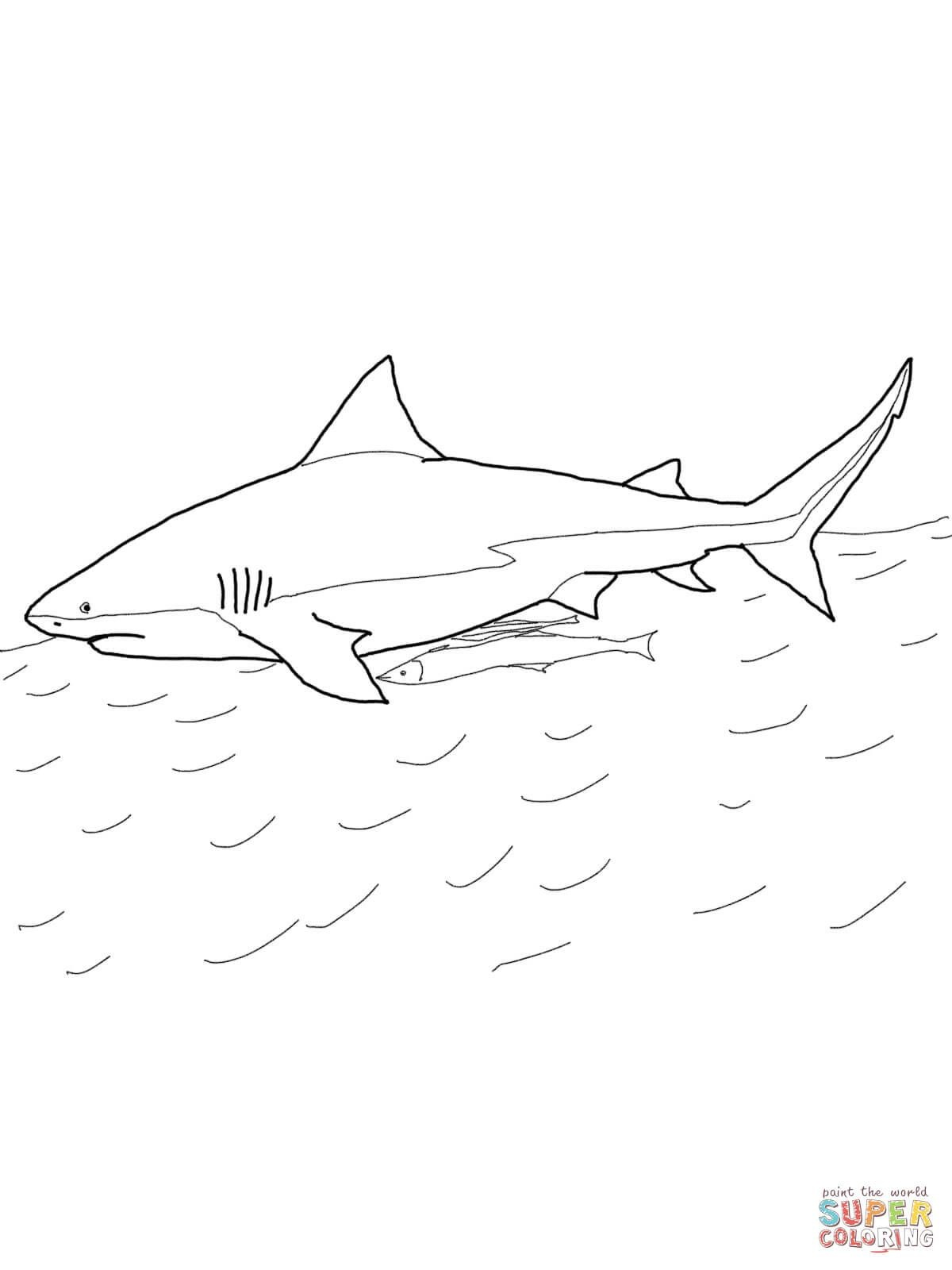 Sharks Coloring Pages Free Coloring Pages | Shark Coloring Pages - Free Printable Shark Coloring Pages