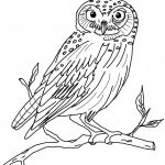 Snowy Owl Coloring Pages Animalswn Sheet   Free Printable Coloring Pages   Free Printable Owl Coloring Sheets