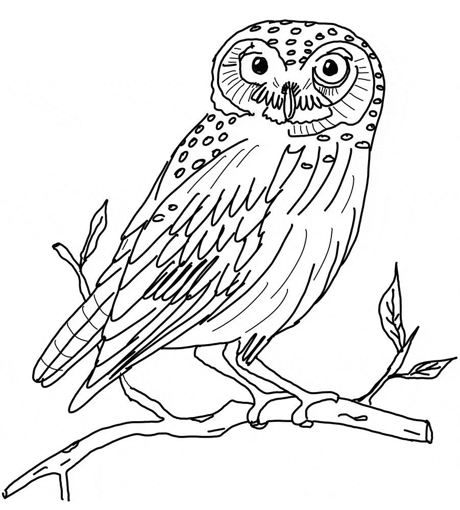 Snowy Owl Coloring Pages Animalswn Sheet - Free Printable Coloring Pages - Free Printable Owl Coloring Sheets