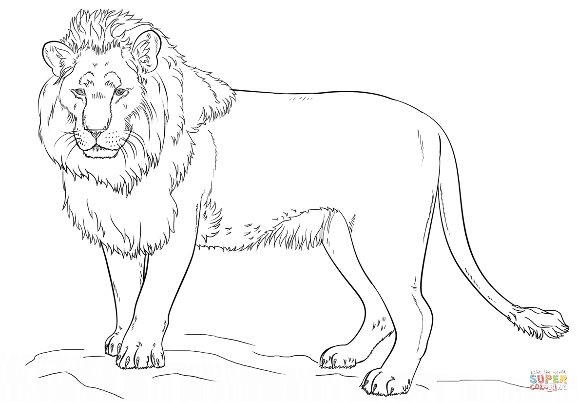 Standing Lion Coloring Page | Free Printable Coloring Pages - Free Printable Picture Of A Lion